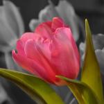 Цветята в гербовете
